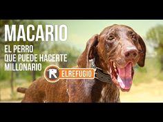 """Macario, el perro de """"El Refugio"""" que puede hacerte millonario..."""