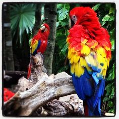 A little bird told us you have Twitter, follow us @XcaretPark