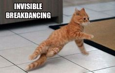 25 Funny Pictures of Cats with Invisible things