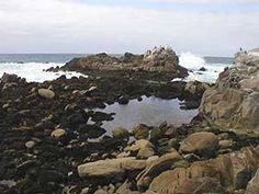 point pinos tide pools. Monterey
