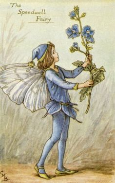 Fairy: The Speedwell Fairy, by (CMB) Cicely Mary Barker, 1935