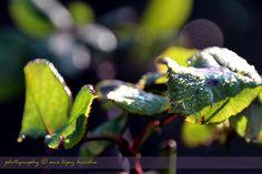 Invierno de colores en La Tierruca (2/2)