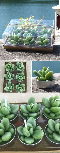 creative cute succulent shaped wedding candle favors