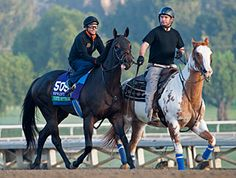 Points Offthebench Fatally Injured in Workout Points Offthebench Fatally Injured in Workout Top Xpressbet Breeders' Cup Sprint (gr. I) contender Points Offthebench fractured his right front fetlock while working Oct. 26 on the Santa Anita Park main track and was euthanized  He won 6 of 8 starts for earnings of $514,940 and would likely have been the program favorite for the BC Sprint.