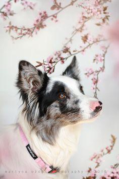 handsomedogs:    Floey :by Martyna Ożóg - Zelda