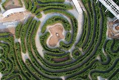 This could be the world's biggest hedge maze
