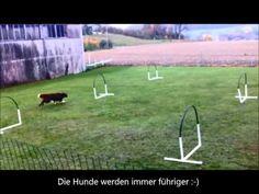 Hoopers / Nadac / Hoopers-Agility / Hundeschule gooddog, Freudwil bei Uster - YouTube