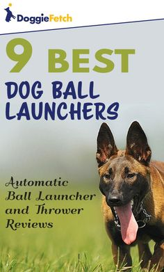 Looking for an automated to to play #fetch with your #dog? Let one of these do it for you! Click here to learn more!
