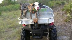 Southern life hog hunting Hog Dog, Hog Hunting, Quad Bike, Atvs, Hunters, Cool Toys, Pallets, Southern, Fan