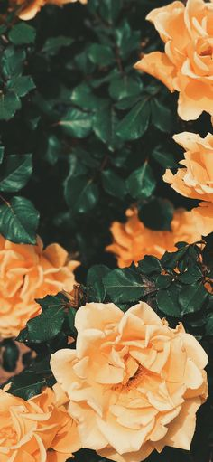 Wallpaper Backgrounds Aesthetic - Aesthetic wallpaper - Wallpaper World Iphone Wallpaper Orange, Flower Phone Wallpaper, Iphone Background Wallpaper, Tumblr Wallpaper, Cat Wallpaper, Black Wallpaper, Orange Aesthetic, Nature Aesthetic, Flower Aesthetic