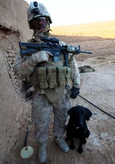 Are Military Dogs Equipment?