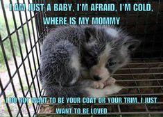 There is NO such thing as humane fur