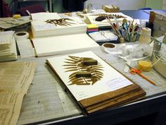 Creating and herbarium specimen