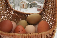 Cool Egg Facts & Video of Hen Laying an Egg!