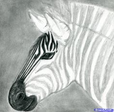 How to Draw a Zebra, Draw a Realistic Zebra, Step by Step, safari animals, Animals, FREE Online Drawing Tutorial, Added by finalprodigy, December 6, 2011, 12:02:11 am