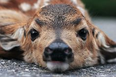 Have You Seen Mommy? by Tula Top #deer
