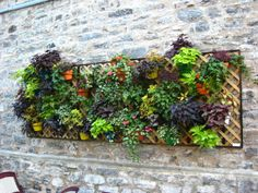 23 Amazing Vertical Garden Ideas for Your Small Yard (20)