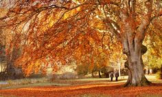 Where to see spectacular autumn colours around the world: our readers' tips