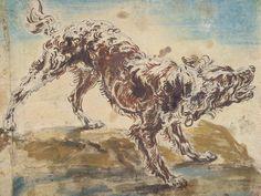 Study of a Dog - Jan Fyt   Animal Drawings