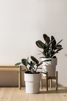 Canning Large Pot Plant Wallpaper, Cute Wallpaper Backgrounds, Cute Wallpapers, Plant Aesthetic, White Aesthetic, Ficus Elastica, Interior Plants, Green Plants, Natural Living