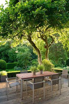 Kugel-trompetenbaum Catalpa Bignoides Nana | Garten | Pinterest ... Terrasse Im Garten Herausvorderungen