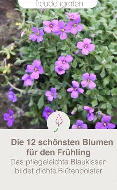 Diese 12 frühblühenden Blumen machen den Frühling bunt. Nicht nur viele Zwiebelblumen blühen im Frühjahr, sondern auch Stauden. Hier Ideen für den eigenen Garten. #Garten #Pflanzen #freudengarten Bunt, Cluster, Plants, Tricks, Ground Cover Plants, Shade Perennials, Blue Pillows, Geraniums