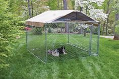 Big Kennel For A Big Dog