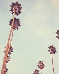California palm trees.