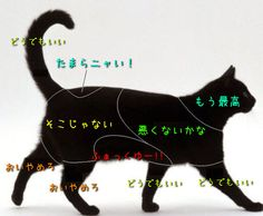 A simple guide to petting cats: Now inEnglish! Toxic Plants For Cats, Cat Safe Plants, I Love Cats, Cute Cats, Funny Cats, Pretty Animals, Cute Animals, Flea Shampoo For Cats, Warrior Cats Books