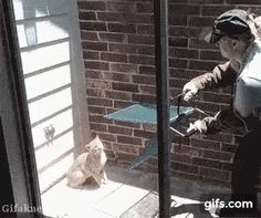 """You'll never take me alive!"" http://ift.tt/2e0pE3p parkour cat"
