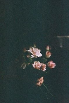 Plants aesthetic wallpaper drawing ideas for 2019 Whatsapp Wallpaper, Pink Images, The Bell Jar, Soft Grunge, Ikebana, Color Photography, My Flower, Rose Flowers, Pretty Pictures