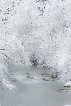 trees and water in winter