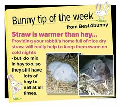 Straw to keep warm mixed with hay to eat