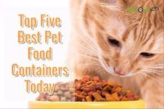 Pet Supermarket Discount Code >> 23 Best Pet Supermarket Images Pet Supermarket Cat Toys Pets