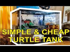 This video shows how easy and cheap to set aquarium for turtles. The money that I use below 50 dollars. The results are baby turtles that pets really love th. Aquatic Turtle Tank, Turtle Aquarium, Aquarium Set, Aquatic Turtles, Turtle Tanks, Red Eared Slider Tank, Yellow Bellied Slider, Red Eared Slider Turtle, Pet Turtle