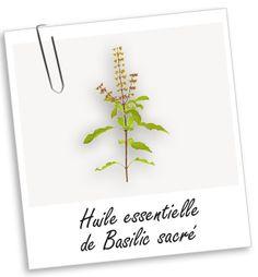 Huile essentielle Basilic sacré BIO Aroma-Zone