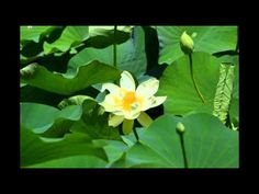 Abraham Hicks ~ How to discover your next step - YouTube