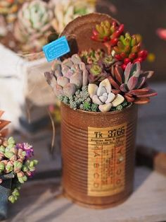 Succulents In Containers, Container Plants, Planting Succulents, Container Gardening, Mini Cactus, Garden Trees, Trees To Plant, Tin Can Crafts, Altered Tins