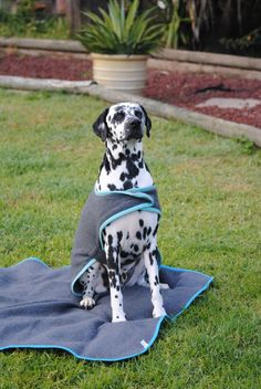 Hughie Dog Coats, Dogs, Coats For Dogs, Doggies, Pet Dogs, Dog
