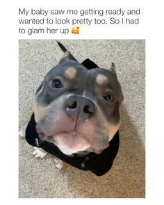 uzi vert - uzi & uzi vert aesthetic & uzi vert & uzi vert wallpaper & uzi vert album cover & uzi painting & uzi and carti & uzi gun Animal Jokes, Funny Animal Memes, Funny Animal Videos, Funny Animal Pictures, Funny Dogs, Hilarious Sayings, Funny Boxer, Dog Videos, 9gag Funny