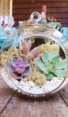 Sunshine & Succulents | Flickr - Photo Sharing!