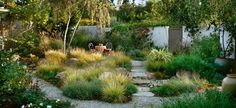drought tolerant courtyard garden, grasses, gravel & stone, by Grace Design Associates