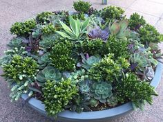 Love this large pot of succulents!