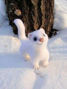 Doninha do Ártico.  Linda, parece de brinquedo !!!!