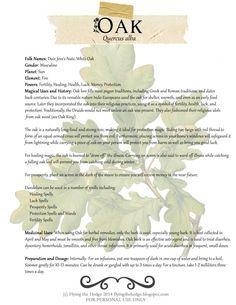 Magical and medicinal uses of Oak
