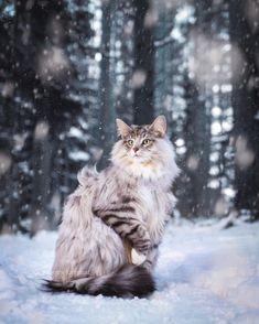 Pretty Animals, Pretty Cats, Beautiful Cats, Cute Cats, Cute Animals, Animals Amazing, Cat Reference, Cat Pose, Cat Aesthetic