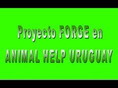 Proyecto FORGE en ANIMAL HELP URUGUAY