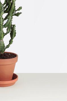 Cactus and Succulents | MyDubio