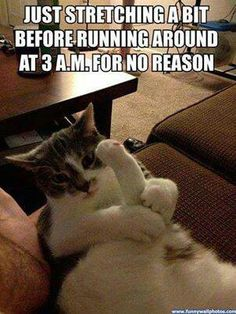 Funny cat pictures: just stretching a bit. Funny Animal Pictures posted every day ! Funny Animal site brings daily updates of funny dogs and cats, pics and videos. Funny Cat Memes, Funny Cute, Funny Captions, Funny Stuff, Funny Cat Humor, Farts Funny, Baby Humor, Pet Memes, Dog Cat