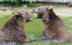 Ausflugstipps in der Steiermark für die ganze Familie. Brown Bear, Animals, Beautiful Landscapes, Back Stitch, Animales, Animaux, Animal, Animais